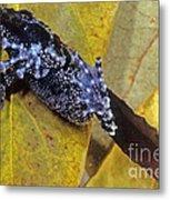 Vietnamese Moss Frog Metal Print