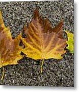 3 Wet Leaves Metal Print