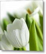White Tulips 3 Metal Print