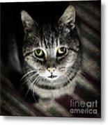 Wonky Eyed Tiger Metal Print