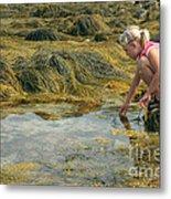 Young Girl Exploring A Maine Tidepool Metal Print
