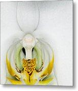 Exotic Orchids Of C Ribet Metal Print
