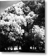 Picnic Tree Metal Print