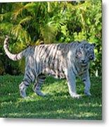 35- White Bengal Tiger Metal Print