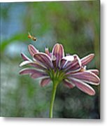 3d Daisy With Bee Metal Print