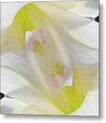 Angelic Lily Metal Print