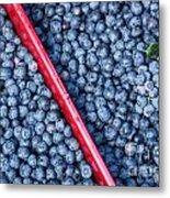 Blueberry Harvest Metal Print
