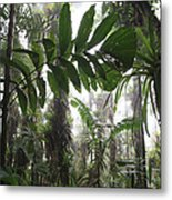Bromeliad Bromeliaceae And Tree Fern Metal Print by Cyril Ruoso