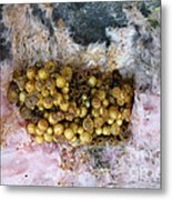 Bumblebee Nest Metal Print