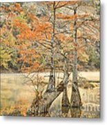 Cypress Trees In The Mist Metal Print by Iris Greenwell