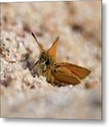 European Skipper Metal Print