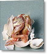Hatching Chicken Metal Print
