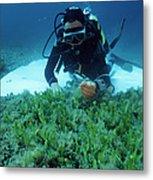 Invasive Seaweed Control Metal Print by Alexis Rosenfeld