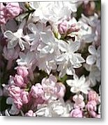 Lilac Named Beauty Of Moscow Metal Print