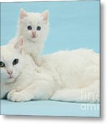 Mother Cat With Kitten Metal Print