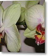 Orchid Love Metal Print