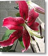 Orienpet Lily Named Scarlet Delight Metal Print