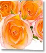 4 Roses Over White Metal Print