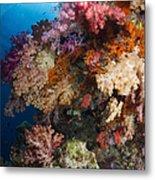 Soft Coral In Raja Ampat, Indonesia Metal Print