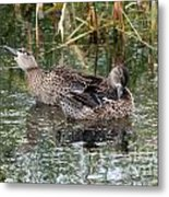 Teal Ducks Metal Print