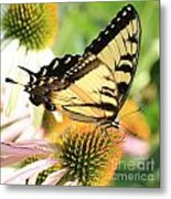 Tiger Swallowtail Butterfly Metal Print