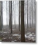 Trees With Fog Metal Print