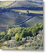 Vineyards And Olive Groves Metal Print