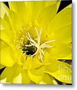 Yellow Cactus Flower Metal Print