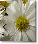 A Bouquet Of Chrysanthemums Metal Print