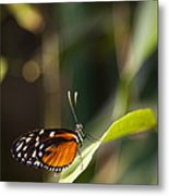 A Butterfly Rests On A Leaf Metal Print