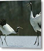 A Pair Of Japanese Or Red Crowned Metal Print