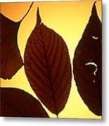 5 Autumn Leaves Metal Print