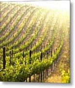Beautiful Lush Grape Vineyard Metal Print
