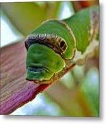 Big Green Caterpillar Metal Print