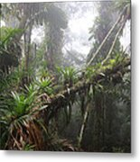 Bromeliad Bromeliaceae And Tree Fern Metal Print