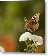 Butterfly On Blooming Flowers Metal Print