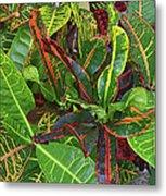 5- Croton Metal Print