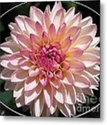 Dahlia Named Valley Porcupine Metal Print