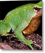 Darwins Frog Metal Print