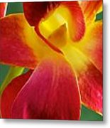 Dendribium Malone Or Hope Orchid Flower Metal Print