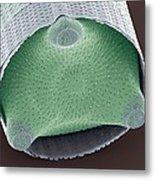 Diatom Shell, Sem Metal Print