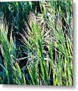 Grass In Bright Sunlight Metal Print