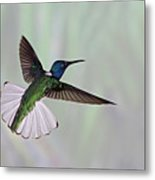 Hummingbird Metal Print by David Tipling