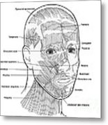 Illustration Of Facial Muscles Metal Print
