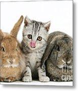 Kitten And Rabbits Metal Print