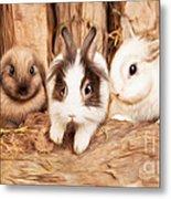 5 Little Rabbits Metal Print