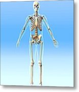Male Skeleton, Artwork Metal Print