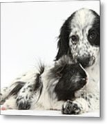 Puppy And Guinea Pig Metal Print
