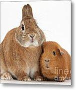 Rabbit And Guinea Pig Metal Print