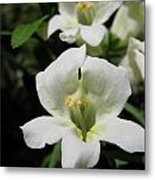 Snapdragon From The Mme Butterfly Mix Metal Print
